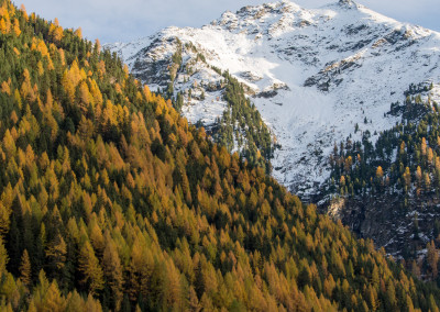Herbstfarben in Niederthai